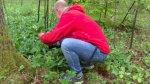 Radioproducent plockar blommor i vår skog